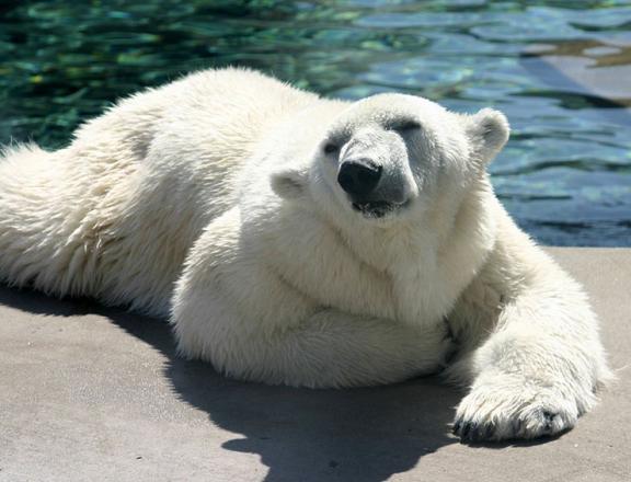 Polar Bears' Fur – The Dark Truth